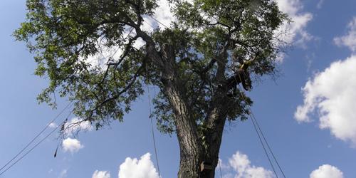 Baumpflege & Naturschutz
