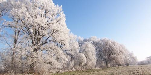 Baumschutzverordnungen