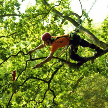 European Tree Climbing Championchip (ETCC) 21.-25.06.2017