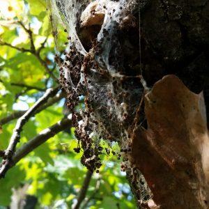 Oben im Baum werden diese dann entnommen.